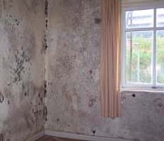 The Secret Signs That Help You Detect Damp In Your Home