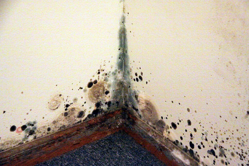 Mould in Schools: a Caretaker's Job or Something to Take Professional Care Over?